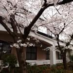 2016/4/3 桜 (信徒館の回廊)