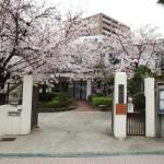 2016/4/3 桜 (正面)