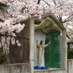 2016/4/3 桜 (飾り窓のイエスさま)